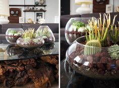 DIY Terrarium:  This is the only way I will have house plant living with a cat.