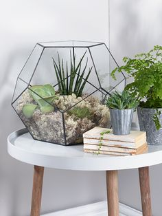 NEW Supersized Glass Prism Terrarium - Decorative Home - Indoor Living