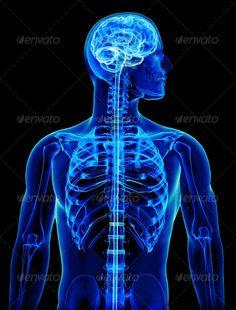 anatomia prostata grayson dolan