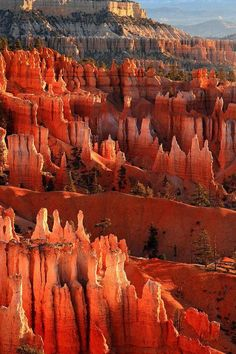 Bryce Art Print featuring the photograph Hoodoos Of Sunset Point At Sunrise In Bryce Canyon by Pierre Leclerc Photography Travel trail canyon de Santiago hiking trails crest trail Bryce Canyon, Zion National Park, National Parks, National Forest, Places To Travel, Places To See, Vacation Places, Vacation Ideas, Nationalparks Usa