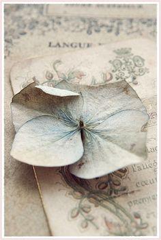 prettie-sweet:    (via een sneller kloppend hart ♥: ~ Prachtige details ~)