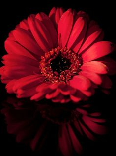 103 Best Flowers Images Dream Wedding Wedding Bouquet Engagement