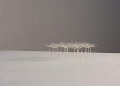 《Little Photo: Serge Domingie, ©Christiane Löhr Japan Design, Exotic Plants, Green Plants, All About Plants, Growing Plants, Planting Flowers, Dandelion, Photography, Inspiration