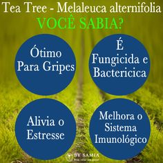 4 dicas sobre o tea tree;  4 tips tea tree essential oil