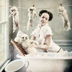 La bella lavanderina canina.