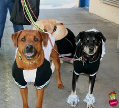 First Coast No More Homeless Pets | #dogtoberfest2014 #fcnmhp