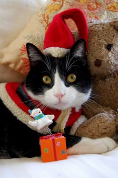 Santa Claws the Christmas kitty. Christmas Animals, Christmas Cats, Merry Christmas, Christmas Morning, Christmas Time, Christmas Sayings, Crazy Cat Lady, Crazy Cats, I Love Cats