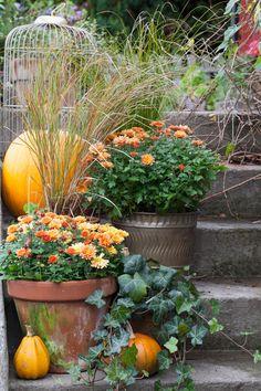 Trädgård i kruka – ny bok med massor av krukinspiration! Fall Flowers, Container Gardening, Flower Designs, Fall Decor, Seasons, Autumn Fall, Landscape, Pretty, Nature