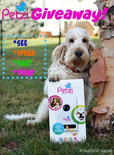 My GBGV LIfe   Enter to win a @petzila Petzi Treat Cam! Monitor your dog when you are away, take photos, speak to him, or give him a treat - all with your smartphone!