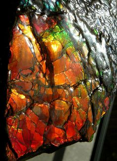 Dragonskin Ammolite that is one cool rock! Minerals And Gemstones, Crystals Minerals, Rocks And Minerals, Stones And Crystals, Gem Stones, Cool Rocks, Beautiful Rocks, Dame Nature, Mineral Stone