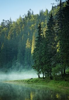 In the Carpathian Mountains - Ukraine. I just want to sleep under one of those trees close to the water. Carpathian Forest, Carpathian Mountains, Places To Travel, Places To See, Beautiful World, Beautiful Places, Nature Photography, Travel Photography, Foggy Mountains