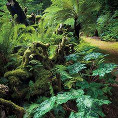 A Northwest garden that looks like a rainforest