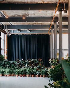 Bergamotte plant pop-up in Bristol Paintworks. Over 4000 house plants are available to buy at this gorgeous event. Tickets available via eventbrite. Pop Up, Visit Bristol, Event Tickets, Paradise Plant, Green Rooms, Travel Design, Step Inside, House Plants, Brick