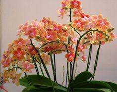 цветы.орхидеи. - Самое интересное в блогах