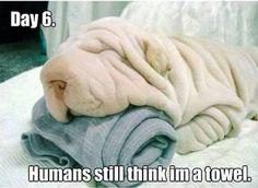 Les chiens qui ressemblent à d'autres trucs qu'a des chiens... Ils vont vraiment…