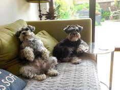Kim's favourite pets on furniture 2013 - part 2 - desire to inspire - desiretoinspire.net