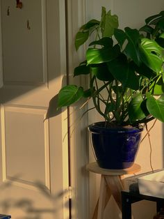 Plant Aesthetic, Aesthetic Room Decor, My New Room, My Room, Pastel Room, Room With Plants, Indie Room, Plant Care, House Rooms