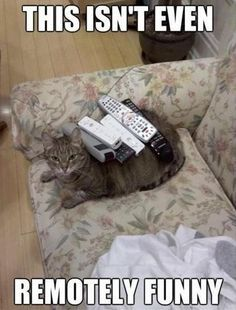 Funny Animal Pictures - View our collection of cute and funny pet videos and pics. New funny animal pictures and videos submitted daily. Funny Animal Memes, Funny Animal Pictures, Funny Images, Funny Animals, Funny Jokes, Funny Pics, Animal Humor, Animal Captions, Cat Jokes