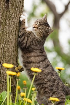 Great Looking Country Cat Stratchin' His Claws on a Tree.