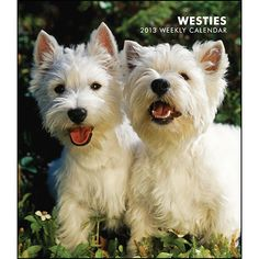 Westies Engagement Calendar: A small dog full of personality, the Westie is energetic, determined, and affectionate. This Scottish breed is a game terrier, which means that the Westie loves the outdoors. Even though these dogs can be a bit mischievous, they are nevertheless loving and devoted companions.  http://www.calendars.com/West-Highland-Terriers/Westies-2013-Hardcover-Engagement-Calendar/prod201300004625/?categoryId=cat10121=cat10121#