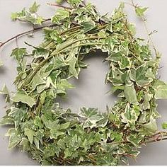 <p> Ivy Trails Variegated 100cm. It is approx. 100cm and wholesaled in bags of 10 trails. Ideal for wedding flowers and venue decoration.</p>