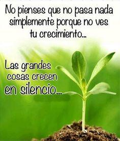 No pienses que no pasa nada simplemente porque no ves tu crecimiento... Las grandes cosas crecen en silencio...