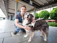 Bildergebnis für blinde menschen mit hunden Blinde, Dogs, Animals, People, Animales, Animaux, Pet Dogs, Doggies, Animal