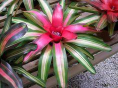 tropical indoor plants | Indoor plant care, tropical plants, orchids, bromeliads, patio gardens ...