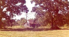 A forgotten shack in between beautiful old oak trees in Louisiana.