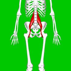 Everything You Need to Know About the Iliopsoas Psoas Release, Tight Hip Flexors, Psoas Muscle, Tight Hips, Need To Know, Everything, Exercises, Strength Training, Anatomy
