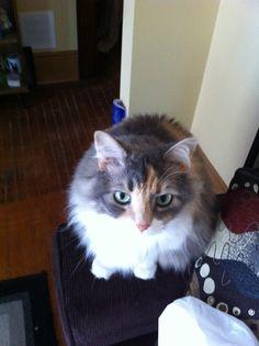 Ridley, Cassie's cat, Kyle's friend