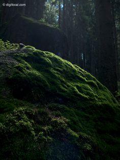 Where the fairies live  Czech Switzerland, Czech Republic