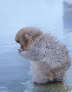 little fuzzy monkey creature