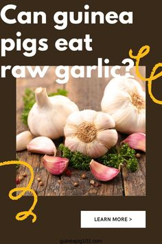 Garlic is one of the most common foods among us. It adds up great flavor to dishes and used for medical purposes too, it has several health benefits, and for us, garlic can be very beneficial. But the question is, what about our guinea pig? Is it is safe for guinea pig too? Can guinea pigs eat garlic? #guineapigeatgarlic #guineapig101 #guineapigfood
