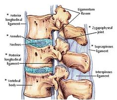 Continuing with our series on back problems, in this article we will try to shed…
