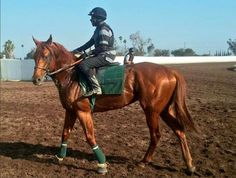 Dortmund recorded his workout since late July when he went a mile today at Los Alamitos Race Course for Art Sherman in Looks like the son of Big Brown is readying for a comeback race & we wish him and his connections all the best Horse Racing, Race Horses, Big Brown, Chicago Area, Vintage Soul, Thoroughbred, Comebacks, Workout, Animals