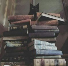 """Cats and books... """"Tale as old as time..."""""""
