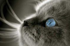 #cat #cats #kitten #catlove #catlover #kitty #blueeyes #loveu #baby #babycat