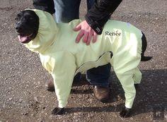 oakley monster hund ducati solbriller