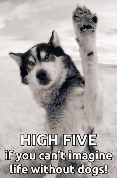 High Five If You Cannot Imagine Life Without Dogs, especially my Siberian Huskies!!