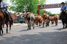 How to Plan a Day Trip to the Fort Worth Stockyards #stepbystep