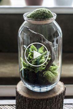 Small Garden Aquarium Ideas That Will Beautiful 11 - Modern Indoor Water Garden, Indoor Plants, Bottle Garden, Garden Pots, Balcony Garden, Inside House Plants, Glass Planter, Terrarium Plants, Cactus Y Suculentas