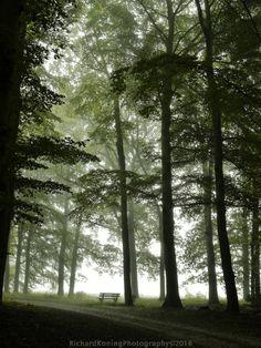 Rust in het bos by Richard Koning