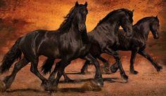 Thundering Hooves by Jean Hildebrant