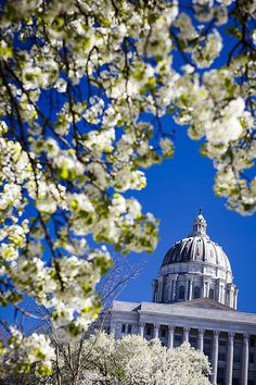 Spring blooms in Jefferson City Missouri with the State Capitol in the background by Notley Hawkins Photography. Taken with a Canon EOS 5D Mark III camera with a Canon EF24-70mm f/2.8L USM lens at ƒ/4.0 with a 1/800 second exposure at ISO 200. Processed with Adobe Lightroom 5.7.  http://www.notleyhawkins.com/