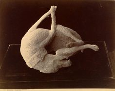 [Cast of a Dog Killed by the Eruption of Mount Vesuvius, Pompeii]; Giorgio Sommer (Italian, born Germany, 1834 - 1914); about 1874; Albumen silver print; 19.5 x 25.2 cm (7 11/16 x 9 15/16 in.); 84.XP.677.31