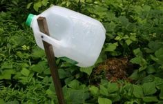 Sugar water or apple juice in a milk jug will trap bees, wasps and hornets.