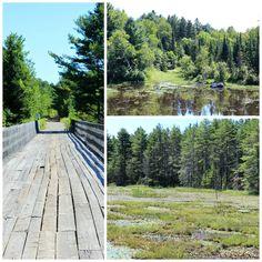 bridge\\lake\\tree