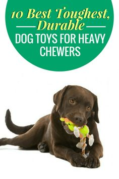 303 Best Best Dog Toys Amp Puppy Toys Images In 2019 Best