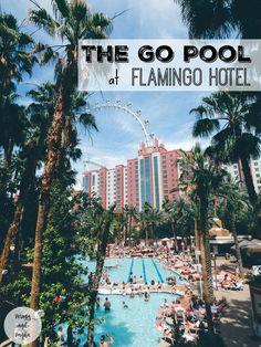 The Go Pool at Flamingo Hotel in Las Vegas - perogyandpanda.com